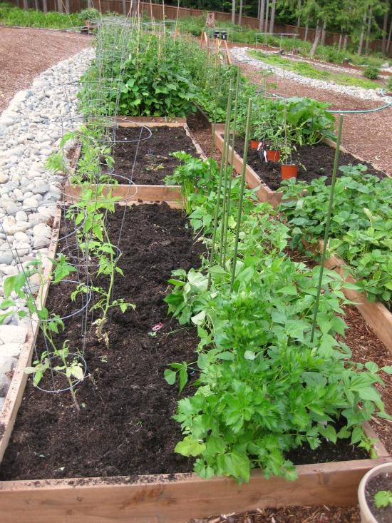 how to plant a companion garden