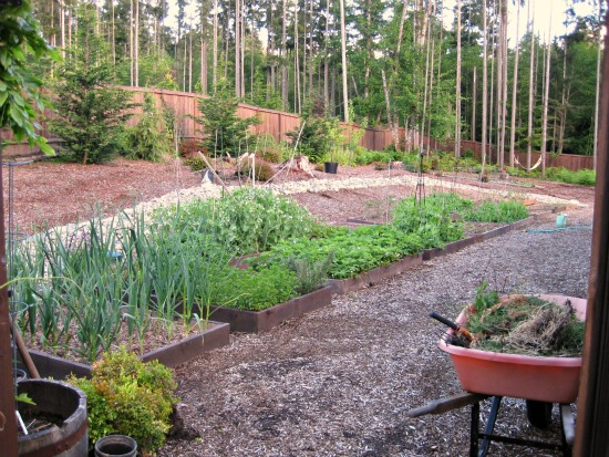 pictures of the garden