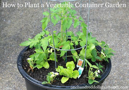 how to start a vegetable container garden one hundred dollars a month. Black Bedroom Furniture Sets. Home Design Ideas