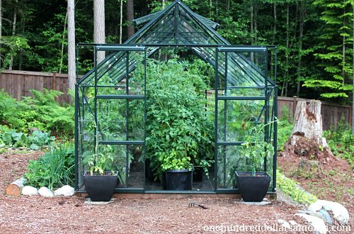 How to Grow Food in a Greenhouse - Tomatoes, Peppers, Strawberries Vegetable Greenhouse Design on poultry house design, raised bed greenhouse design, citrus greenhouse design, vintage greenhouse design, mushroom design, vegetable hydroponics, garden greenhouse design, vegetable gardening, vegetable flowers, high tunnel greenhouse design, strawberry greenhouse design, hydroponic greenhouse design,