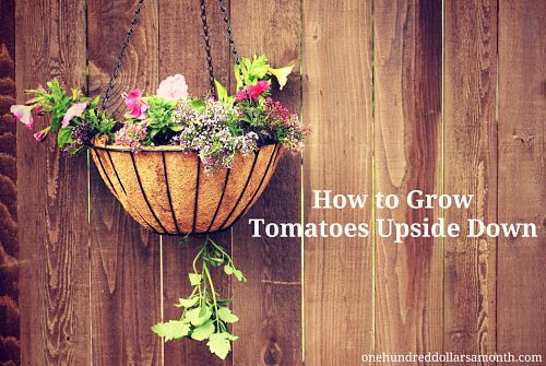 Gardening Tips And Tricks How To Grow Tomatoes Upside