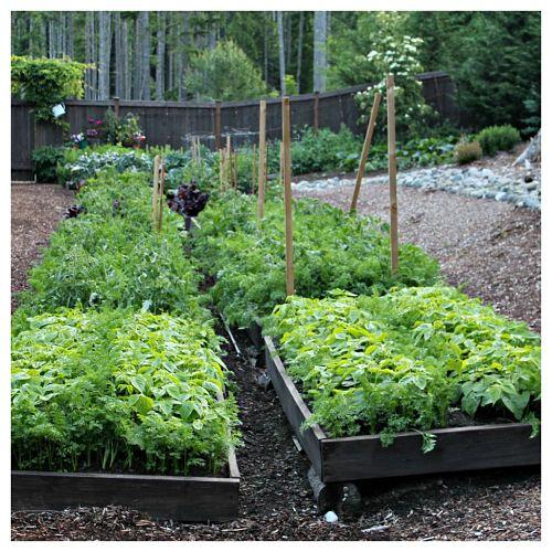 How to grow your own food mavis vegetable garden tour for Grow your own vegetable garden