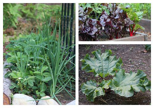 how to grow a vegetable garden in my backyard