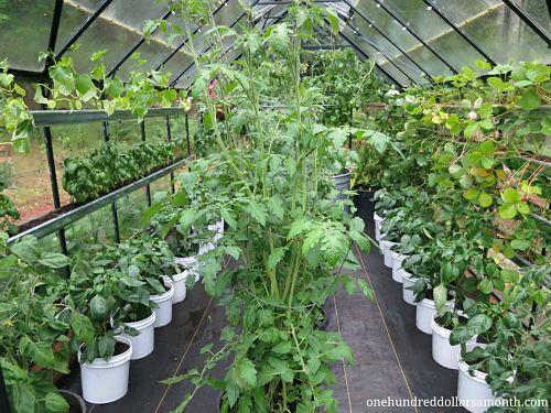 Greenhouse Gardening For Beginners Winter