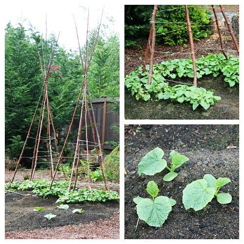 How to grow your own food mavis 39 vegetable garden tour for Grow your own vegetable garden