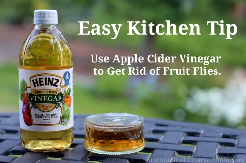 Easy Kitchen Tips   How To Get Rid Of Fruit Flies   One Hundred Dollars A  Month