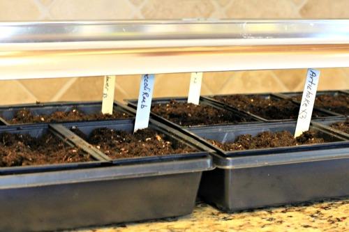 start seeds under grow lights