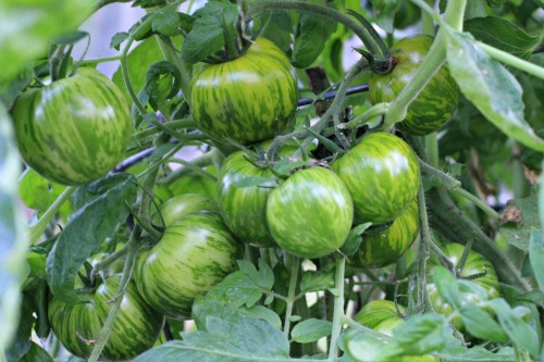 How To Grow Your Own Food Mavis Vegetable Garden Tour