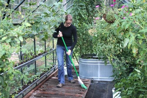 Mavis garden blog growing lettuce in a pallet garden for Build a greenhouse from pallets