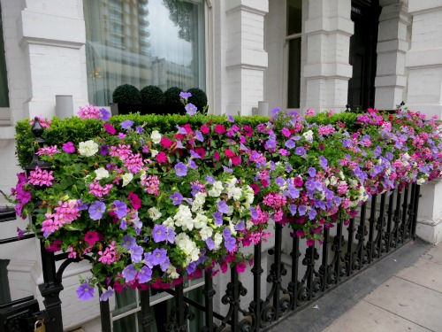 London Pictures Of Various Front Doors And Window Boxes One Hundred Dollars A Month