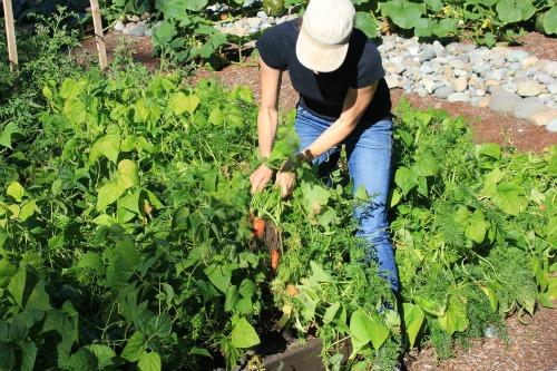 mavis butterfield garden blog