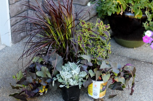 Mavis Garden Blog Ideas For Summer Container Gardening One
