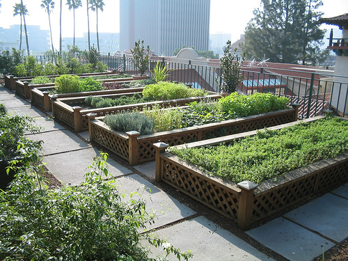 Green gardens rooftop gardens in the city one hundred dollars a month - Maison jardin senior living community reims ...