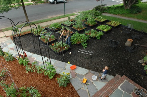 front yard garden.  Pictures of Front Yard Vegetable Gardens One Hundred Dollars a Month