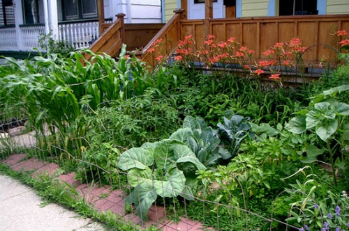 Pictures of front yard vegetable gardens one hundred for Vegetable garden designs south africa