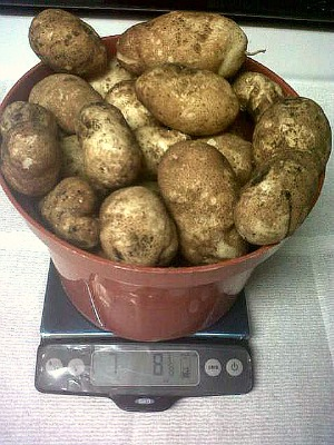 Can Your Grow Potatoes In Trash Cans Reader Kk Sends In