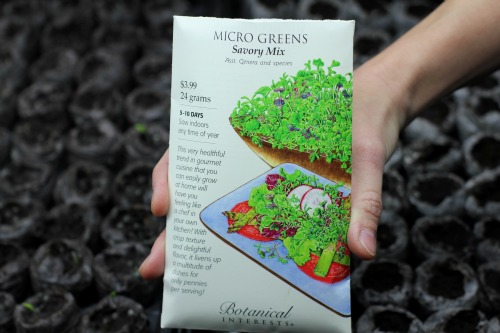 How to Grow Microgreens {Start to Finish} - One Hundred Dollars a Month