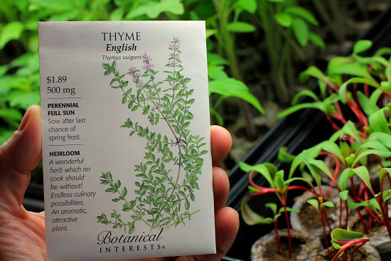 english thyme seed packet