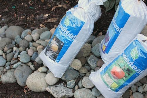 fruit trees in bags
