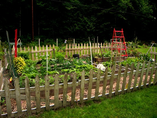 Small Garden Fencing: Charla From Bellingham, Washington Sends In