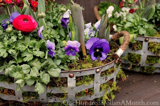 DIY spring flower basket with moss