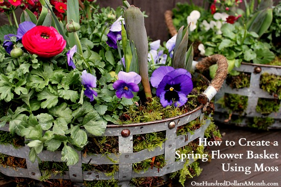 How to Create a Spring Flower Basket Using Moss