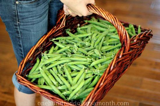 basket of fresh peas