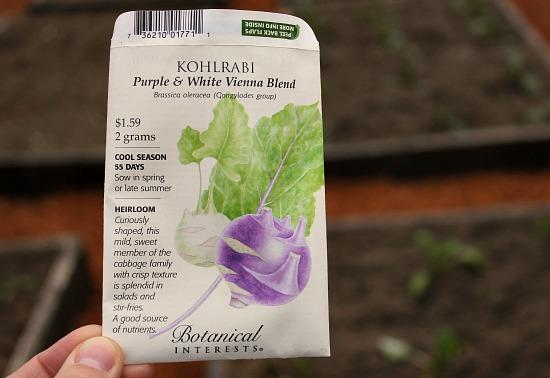 botanical interests kohlrabi seeds purple and white