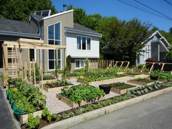 Is Having A Garden In The Front Yard Illegal?   One Hundred Dollars A Month