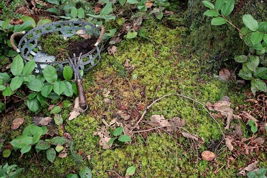moss for garden baskets