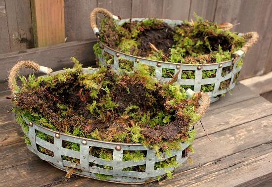 moss lined flower baskets