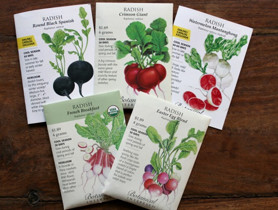 radish seeds botanical interests