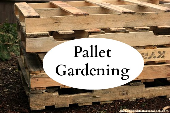 Pallet Gardening 101: Creating A Pallet Garden   One Hundred Dollars A Month