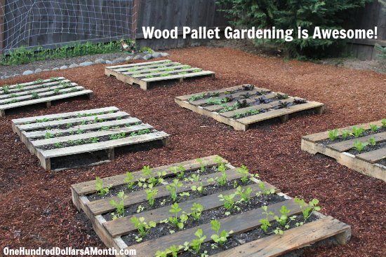 diy wood pallet garden spinach lettuce celery strawberries and boy choy one hundred dollars a month - Garden Ideas Using Wooden Pallets