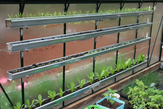Growing Vegetables In A Greenhouse   Spinach, Lettuce, Basil And More   One  Hundred Dollars A Month