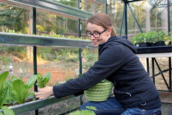 gardening in gutters romaine lettuce