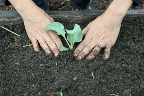 How to Build and Plant a Square Foot Garden - One Hundred ...