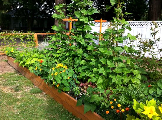 raised-garden-bed