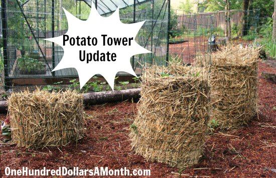 Planting Potatoes In Hay