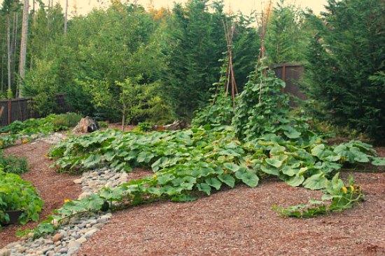 gardening-how-to-grow-a-bean-teepee