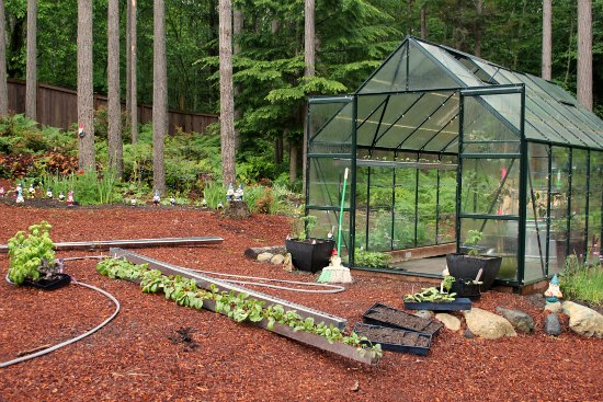 how to grow green peppers in a greenhouse