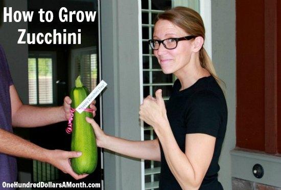 how to grow zucchini