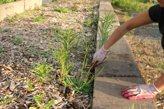 Mavis checks in on her neighbor girly girl 39 s garden one for Gardening tools dublin