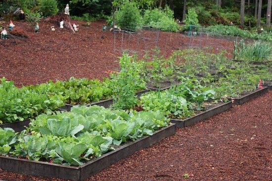 raised garden beds organic gardening