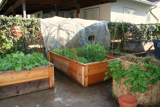 raised garden beds potato tower