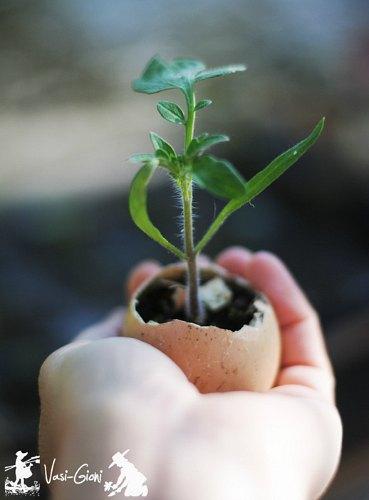 start seeds in egg shells