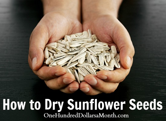 How to Dry Sunflower Seeds