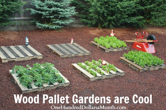Wood Pallet Garden Planting Dried Beans One Hundred