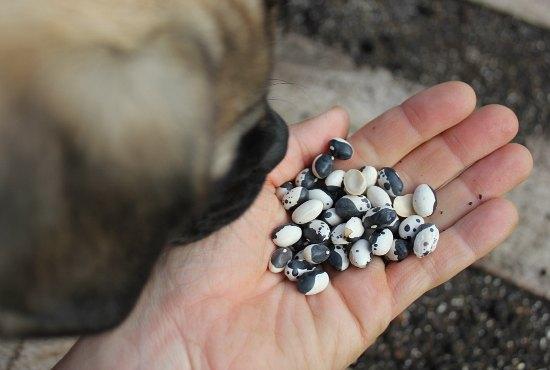dried orca beans