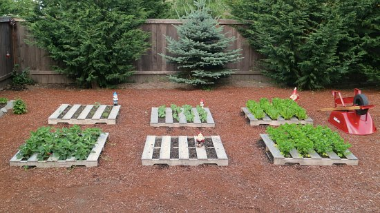 Mavis butterfield backyard garden plot pictures week for Idee per arredare i giardini